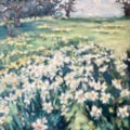 field of golden daffodils