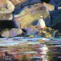 icelandic seagull