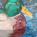 me duck