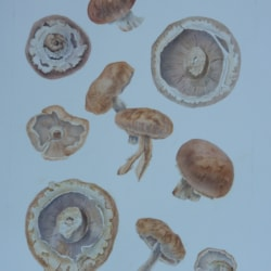 mushroom study page