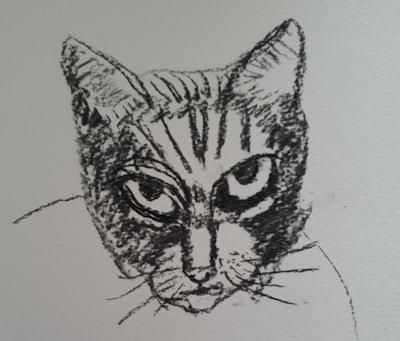 not a happy cat