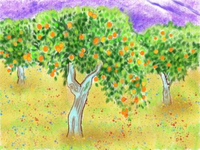 orange grove best
