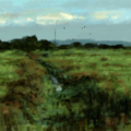 overgrown stream