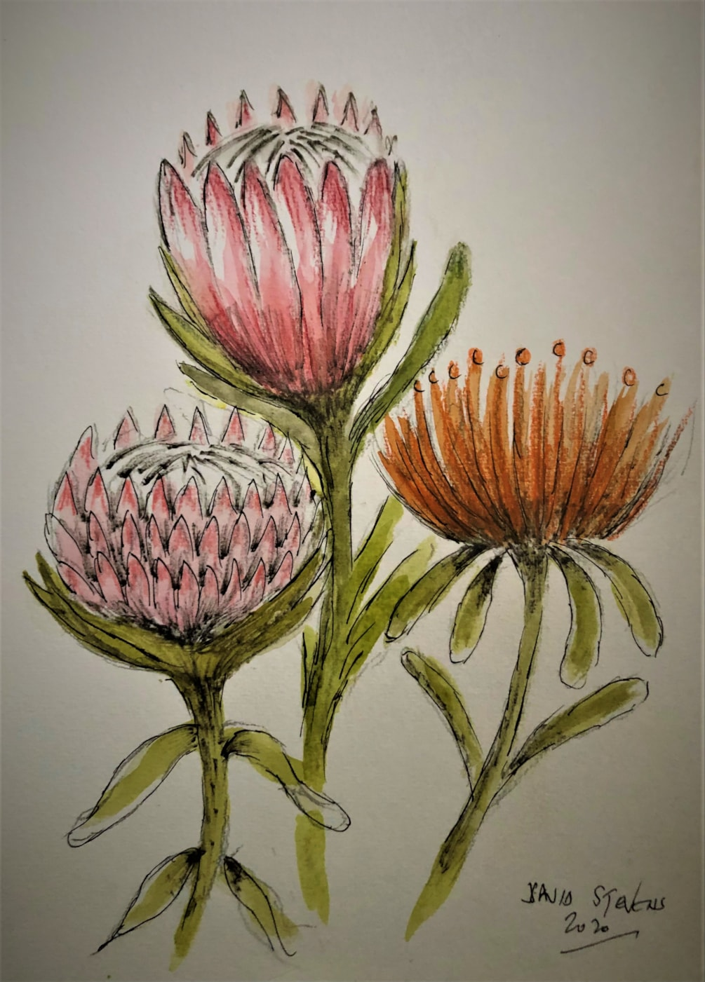 proteas (2)