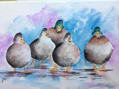 reservoir ducks.j