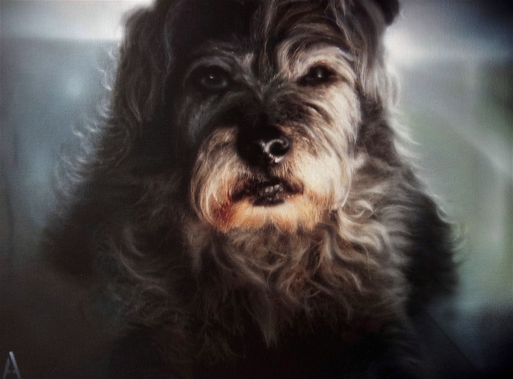 rocky dog 1