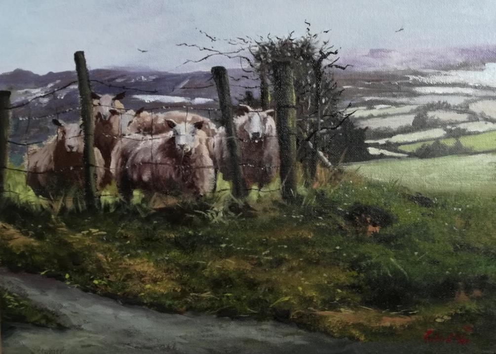 shropshire sheep 10x14