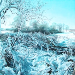 snow hedgerow