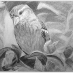 sparrow in hedge 2020