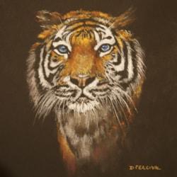 tiger4 (2)