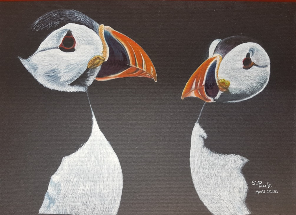 A4 watercolour & inktense puffins in Wales March 2020
