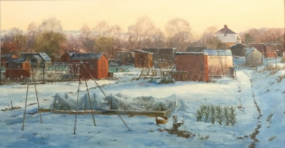 Early Sun at Marford Allotments. 2.