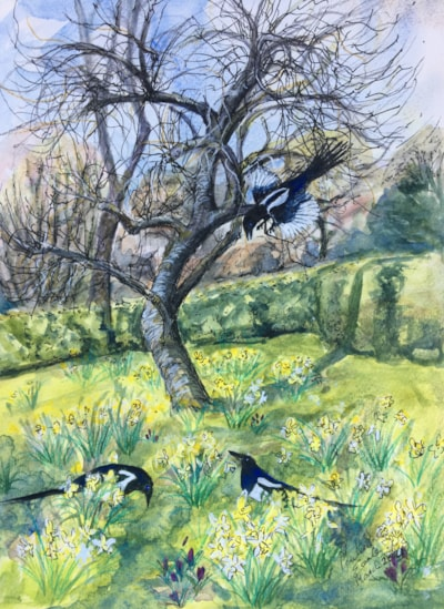 Magpies in The Orchard