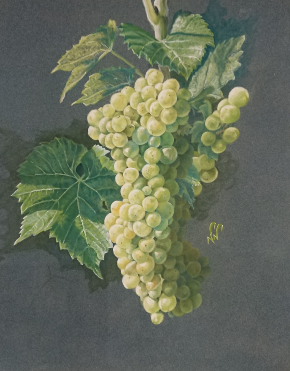 Seyval grapes