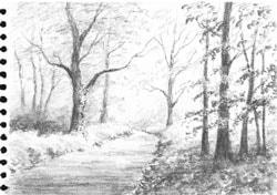 Tonal sketch of a woodland scene