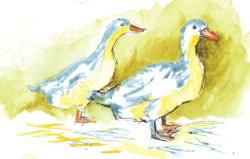 Paint White Ducks - stage 2