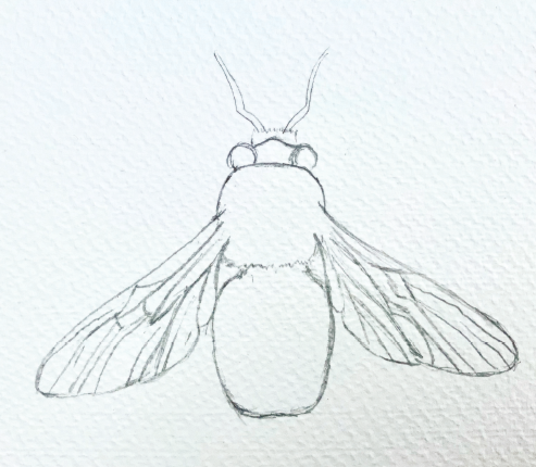 Bee drawing outline