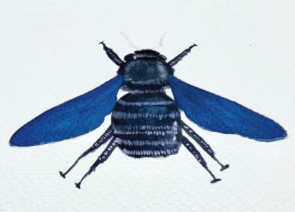 Painting a watercolour bee
