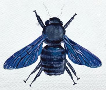 Highlighting bee wings