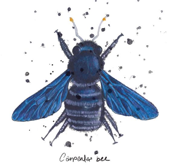 Watercolour carpenter bee