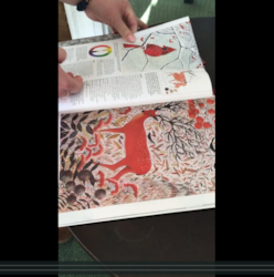 Screenshot_2020-02-06 Settings - video