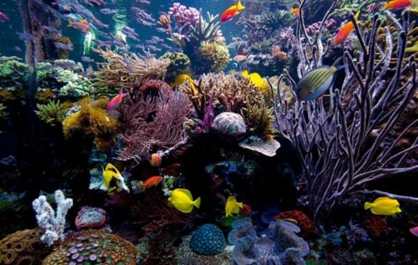 David Saxby S Ultimate Reef Tank Practical Fishkeeping