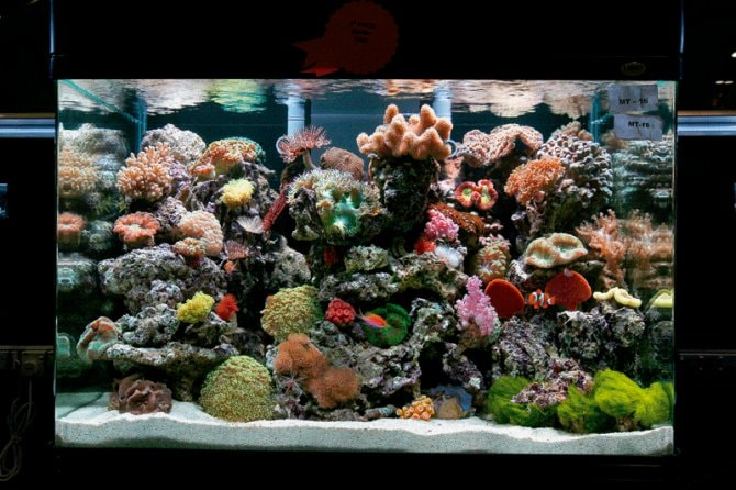 How should I aquascape my reef tank? - Practical Fishkeeping