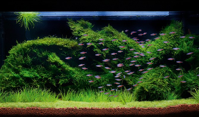 Christmas Moss Carpet.How To Grow Your Own Moss Carpet Practical Fishkeeping