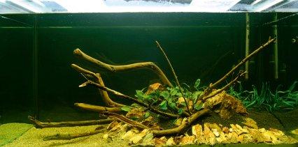 How To Set Up A Cryptocoryne Aquarium Practical Fishkeeping
