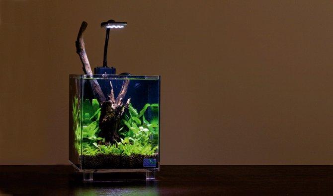 How To Set Up A Microhabitat Nano Aquarium Practical Fishkeeping