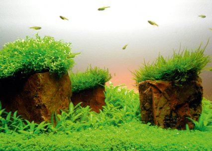 How To Aquascape Small Tanks Practical Fishkeeping