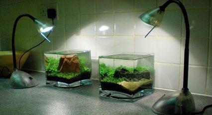 Best Aquarium Lamp (10 gallon aquarium