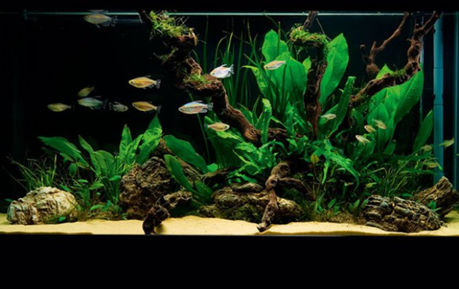 How To Set Up A Simple But Stunning Planted Tank Practical