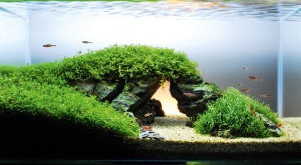 How To Re Create A Famous Landmark In Your Aquarium Practical Fishkeeping
