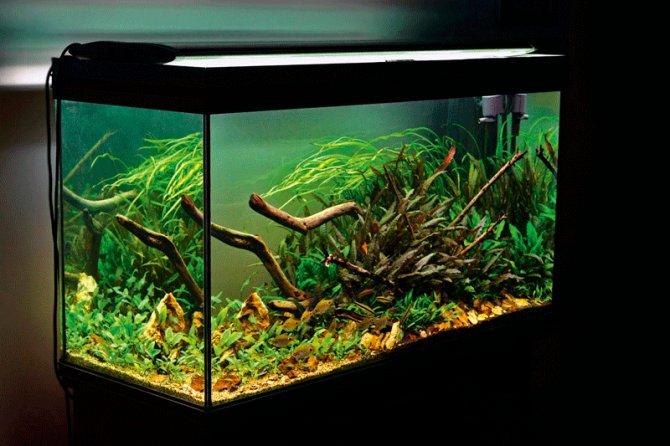 Carbon in the planted aquarium: Gas vs  liquid - Practical