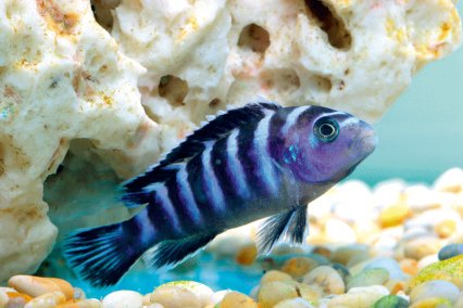 The 75 Most Colourful Fish Practical Fishkeeping