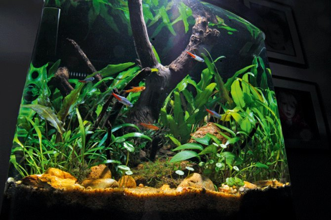 10 planted tank myths - Practical Fishkeeping