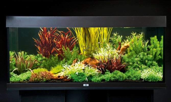 How to set up an aquarium with plastic plants - Practical ...