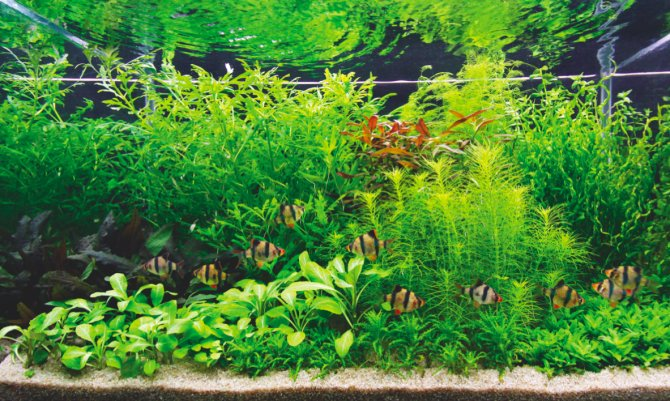 How To Set Up A Dutch Style Aquascape Practical Fishkeeping