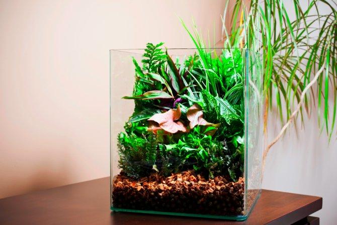 21 Plants To Avoid In The Aquarium Practical Fishkeeping