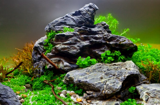 How To Get Your Aquascape Right First Time Practical Fishkeeping