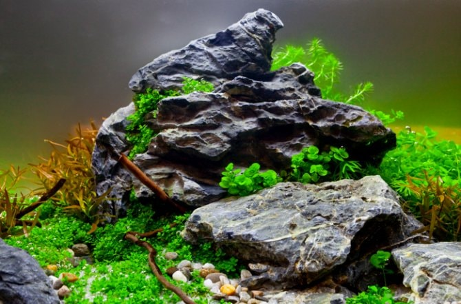 How to get your aquascape right first time - Practical ...