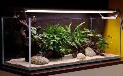 Celebrity Tank Makeover Practical Fishkeeping