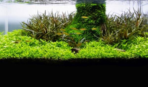 Aquascaping With A Shallow Aquarium Practical Fishkeeping