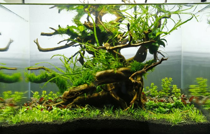 How To Create A Shrimpscape Practical Fishkeeping