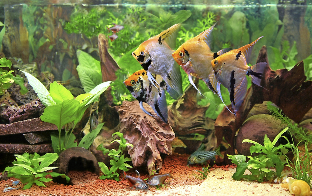 How To Avoid Old Tank Syndrome Practical Fishkeeping
