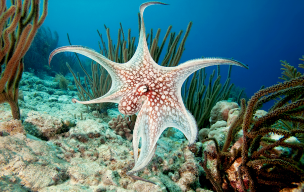 Octopus are fascinating creatures — just ensure they can't escape from your tank!