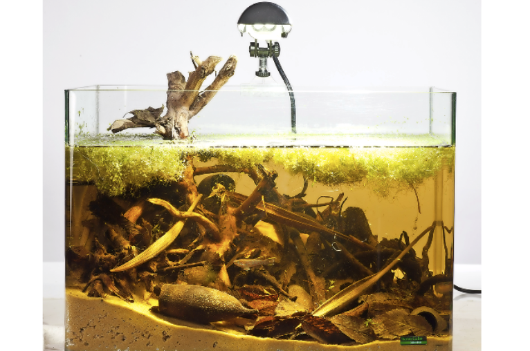 This killifish set-up includes leaf litter on the base.
