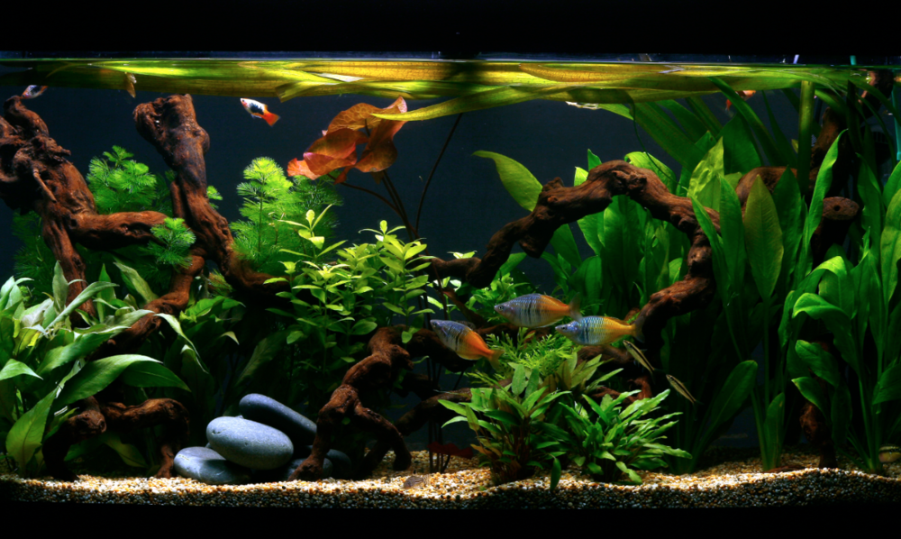 Gravel looks natural and is reasonably cheap to buy. But it does need regular cleaning, especially if you have bottom-dwelling fish like catfish and loaches, that spend much of their lives in contact with the substrate.