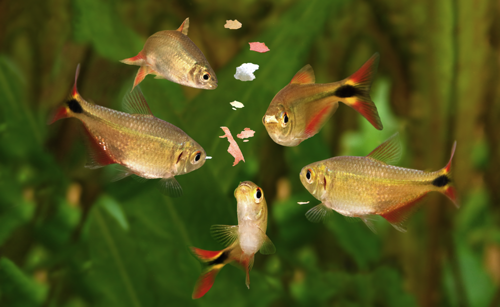 If you are finding too much food is reaching the bottom before the fish have chance to eat it, try adding a little at a time rather than feeding it all at once.
